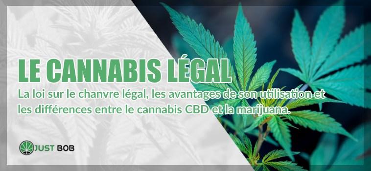Le cannabis cbd lègal ou cannabis CBD et la marijuana