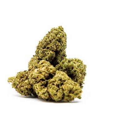 fleurs de cannabis CBD Master Kush