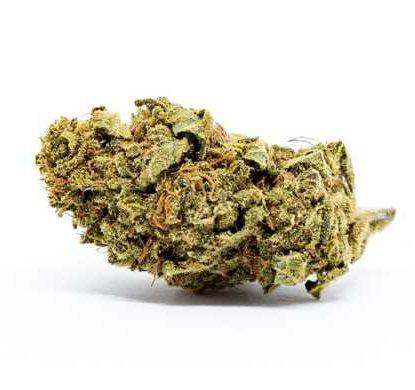 melon-kush-cbd-fleur-plante-de-cannabis