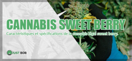 specifications cannabis sweet berry
