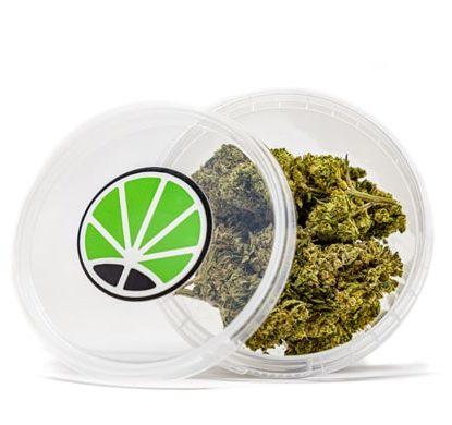 gorilla glue fleur cbd marijuana france