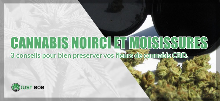 Cannabis legere noirci et moisissures