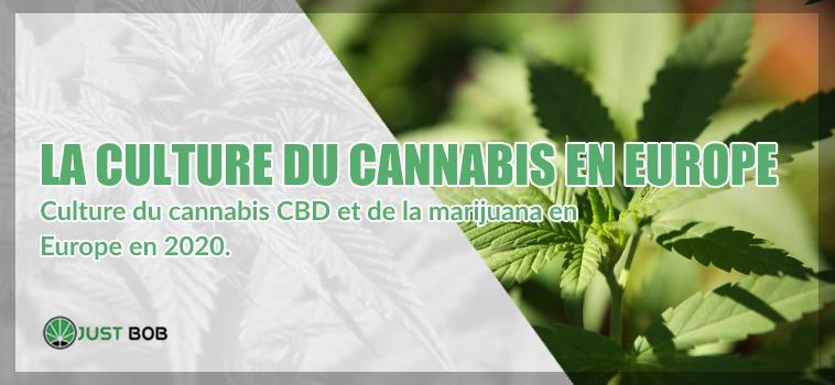 Culture du cannabis CBD