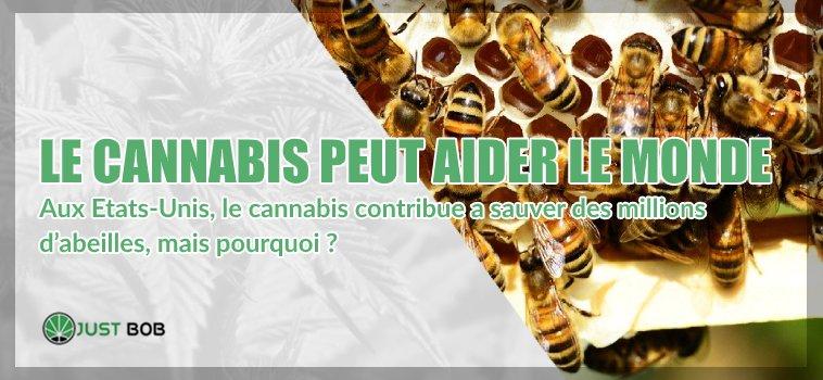 cannabis cbd et abeilles