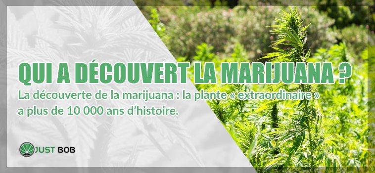 découverte de la marijuana cbd