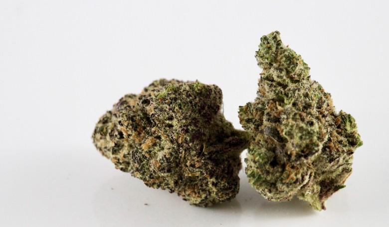 les odeurs de cannabis CBD