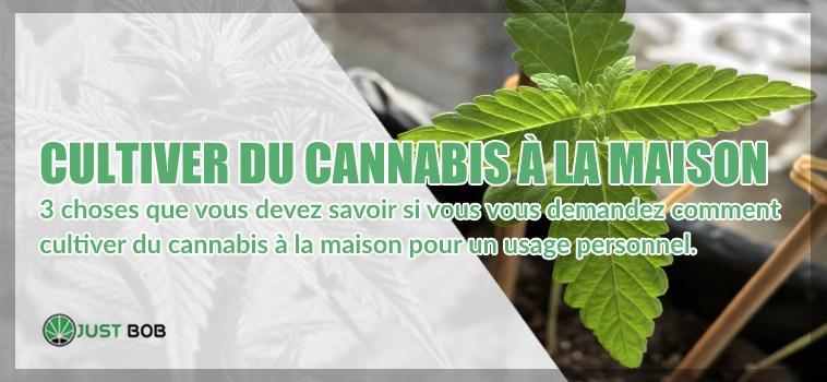 marijuana cbd à la maison