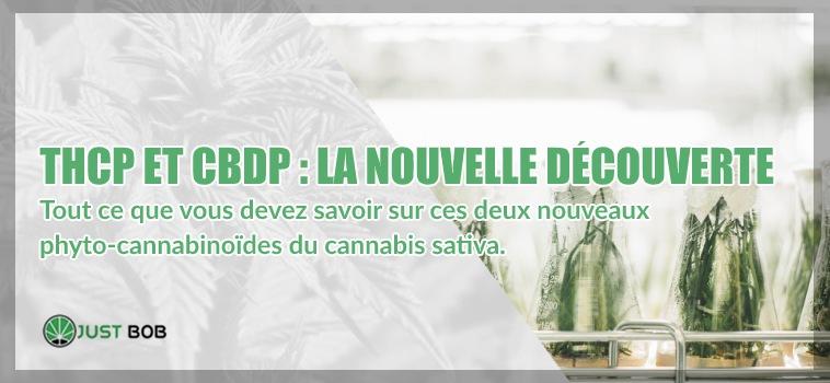 nouvelle découverte de cannabis cbd