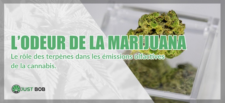 odeur de la marijuana cbd
