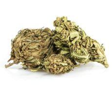 Outdoor Mix Fleur de Cannabis