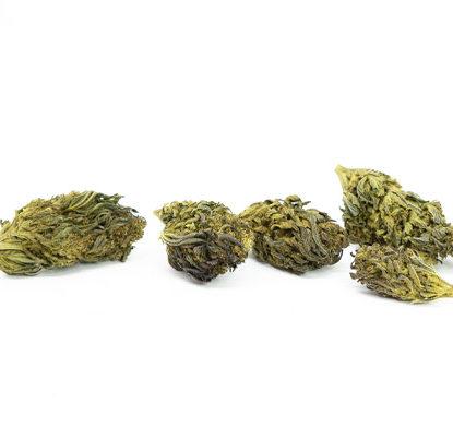 Purple Haze Fleur de Cannabis CBD