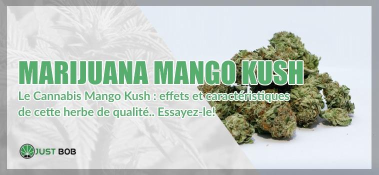 Marijuana Mango Kush cbd