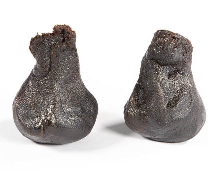 2 Pieces moulees Haschisch CBD Girl Scout Cookies