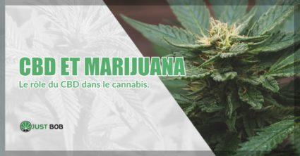 CBD et marijuana