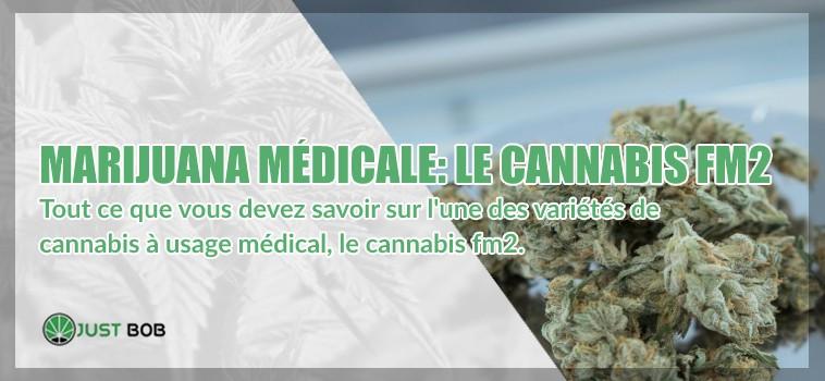 marijuana légal et cannabis fm2