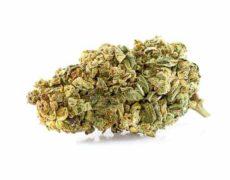 Purple GG#4 CBD Fleur inférieur 25%