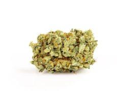 Cannabis Legal Purple GG