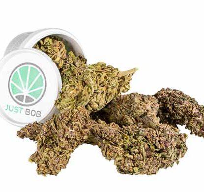 Purple fleur de cannabis