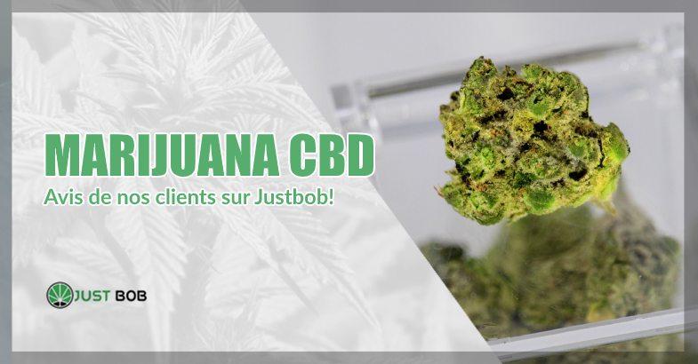 Marijuana CBD avis sur just bob