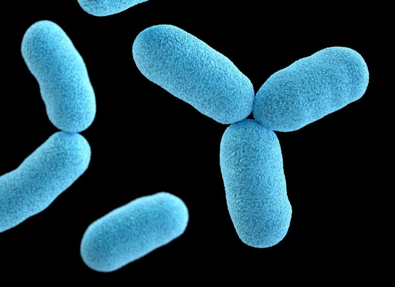 cbd comme aide aux antibiotiques contre les bactéries