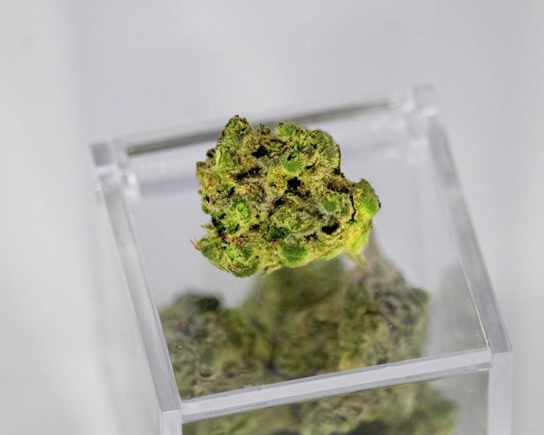 thc et cbd responsables des effets du cannabis