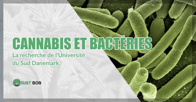 Cannabis et bactéries