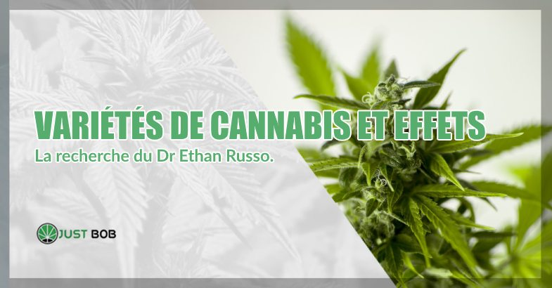 Variétés de cannabis et effets