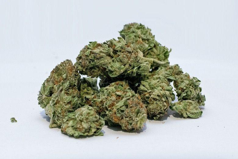 acheter CBD et ne pas le planter cannabis