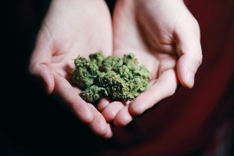 conséquences de l'interdiction de la marijuana classique et CBD