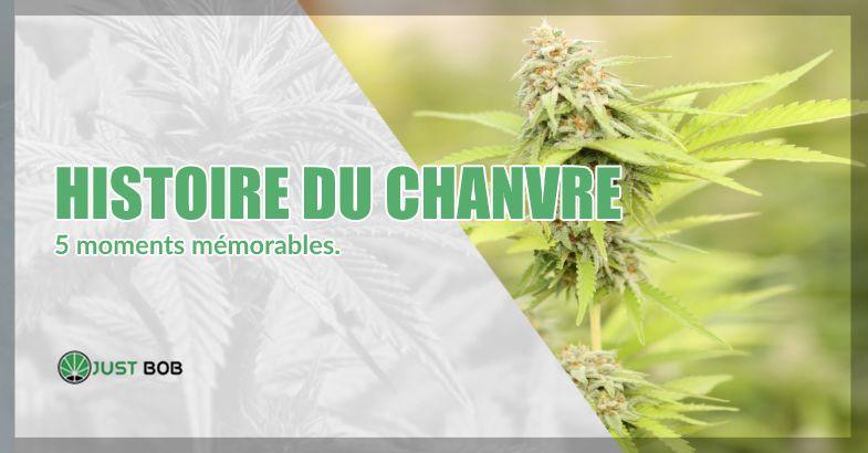 histoire du cannabis classique et canabis légal