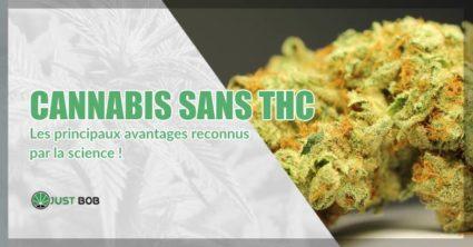 Cannabis sans THC les principaux avantages