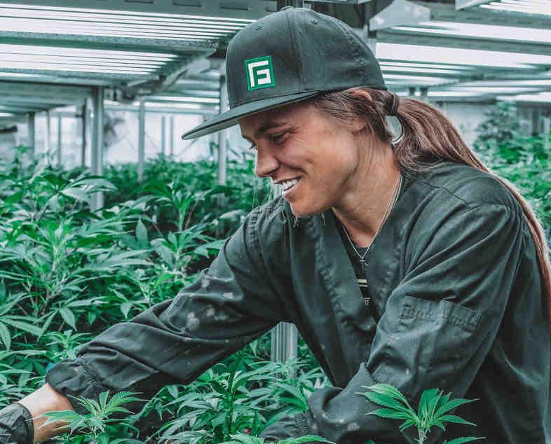 Producteur de cannabis en Uruguay