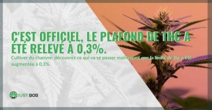 C'est officiel, le plafond de THC a été relevé à 0,3%