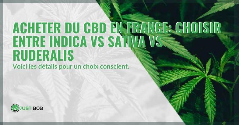 Acheter du cannabis CBD en France en choisissant entre indica, sativa et ruderalis
