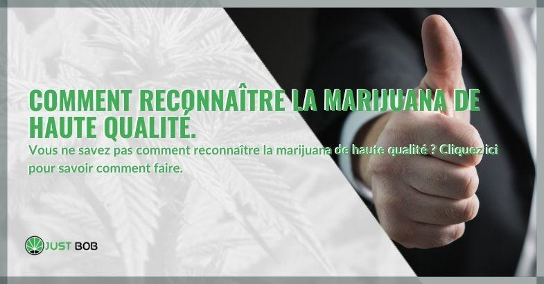 Comment reconnaître la marijuana de haute qualité.