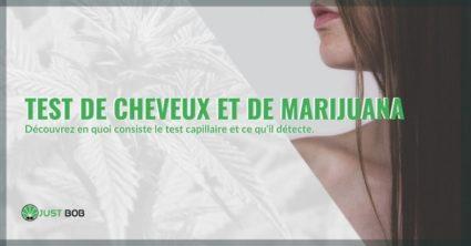 Le test capillaire à la marijuana, comment ça marche?