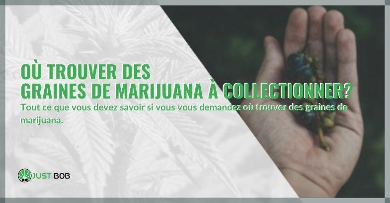 Où trouver des graines de marijuana à collectionner?