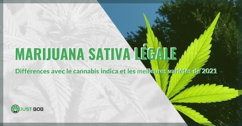 Marijuana sativa légale