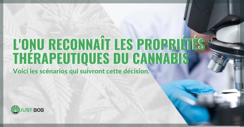 Tournant historique: l'ONU reconnaît les propriétés thérapeutiques du cannabis.