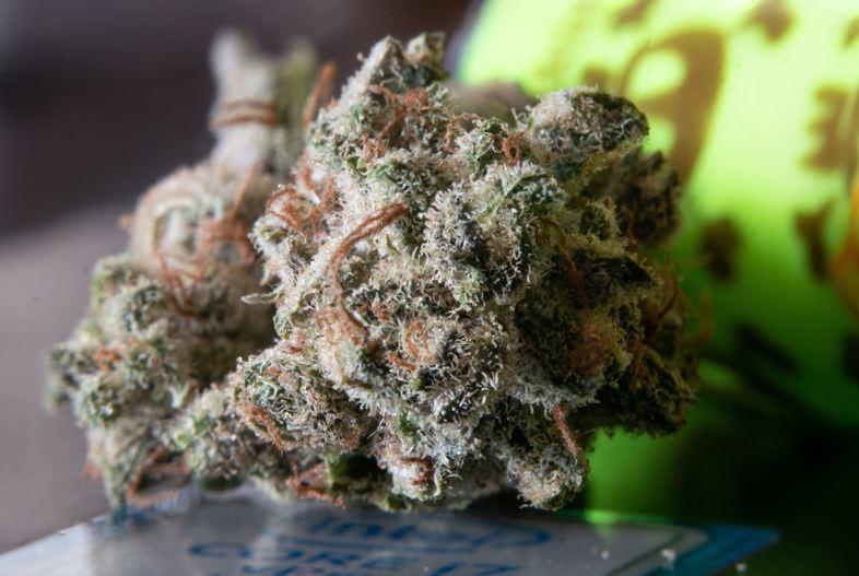 Légale CBD Weed: Voici quelques informations utiles