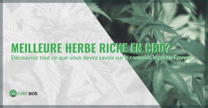 Tout savoir sur la meilleure herbe riche en CBD de France