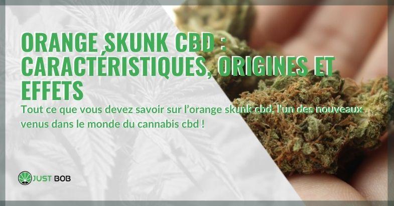 Les caractéristiques, origines et effets de l'Orange Skunk CBD