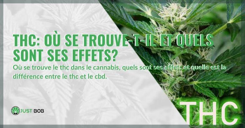 Dans quelle partie de la plante de cannabis se trouve du THC?