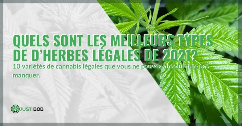 Les meilleurs types de cannabis légal de 2021, quels sont-ils?
