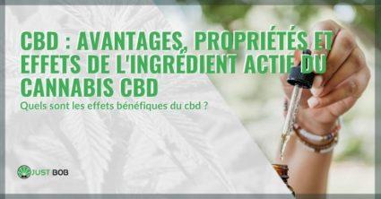 Propriétés, bienfaits et effets du CBD, l'ingrédient actif du cannabis