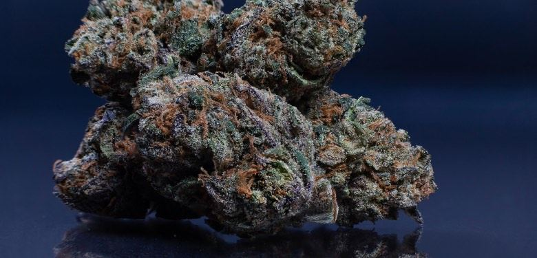 Origines de la meilleure variété de cannabis au monde: Forbidden Fruit