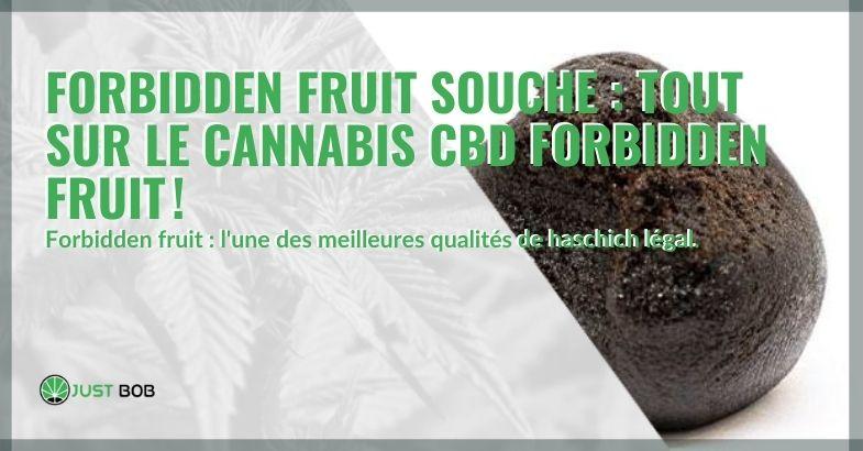 Tout sur le haschich légal Forbidden Fruit