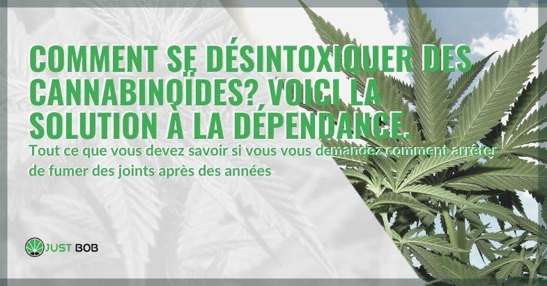 Voici la solution pour se désintoxiquer de la dépendance aux cannabinoïdes
