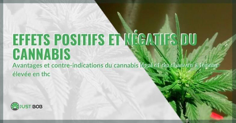 Les effets du cannabis : positifs et négatifs