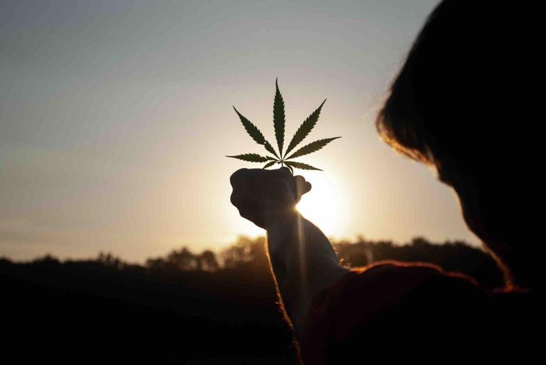 Toutes les différences entre le cannabis légal et illégal